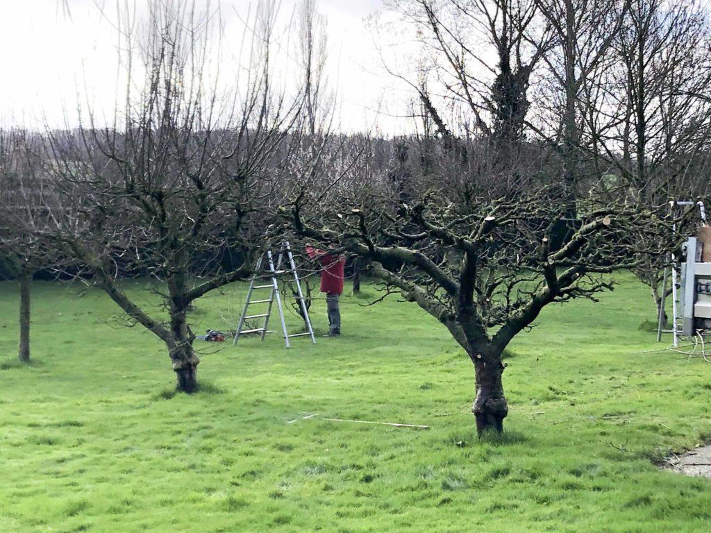 taille d'arbustes par nature et jardins service
